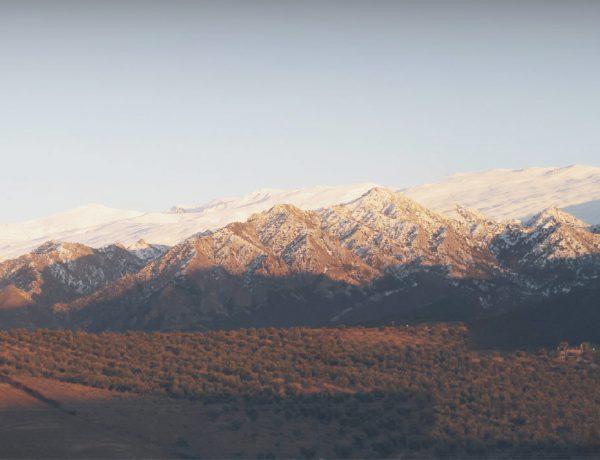 La Almazara Quaryat Dillar pertenece ya a la Marca Parque Natural de Andalucía que la certifica como una empresa al servicio del medio ambiente y del desarrollo sostenible