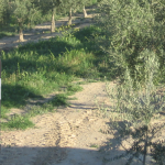 Aceite Quaryat Ecológico premiado en concurso italiano Domina. Medalla de oro