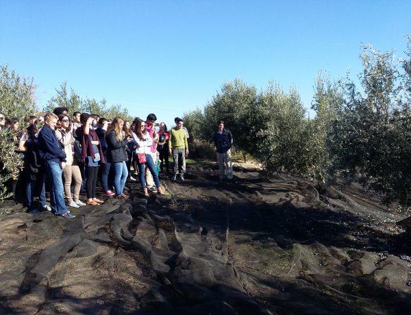 vista de jóvenes a la almazara Quaryat Dillar actividad oleoturismo