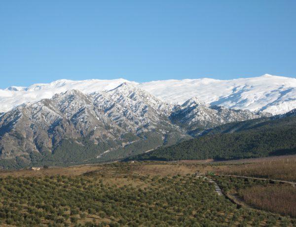 Ecoturismo en el parque natural de Sierra Nevada la Almazara Quaryat Dillar realiza actividades de Oleoturismo responsable con el medio ambiente