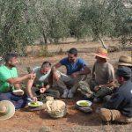 Cosecha de aceitunas de Sierra Nevada y degustacion de aceites Quaryat Dillar