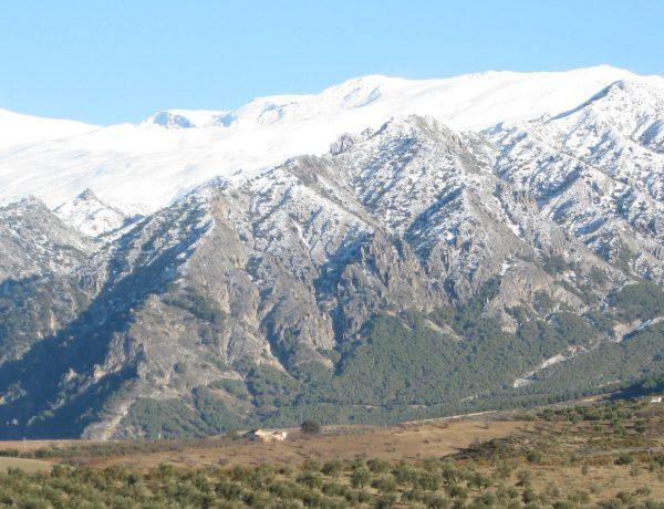 Sierra Nevada vista desde la Almazara Quaryat Dillar. Oleoturismo y ecoturismo en la Almazara Quaryat Dillar